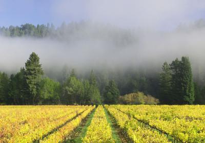 20150216_vineyard